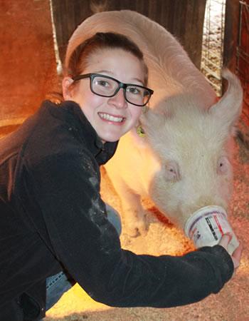 Girl feeding a pig