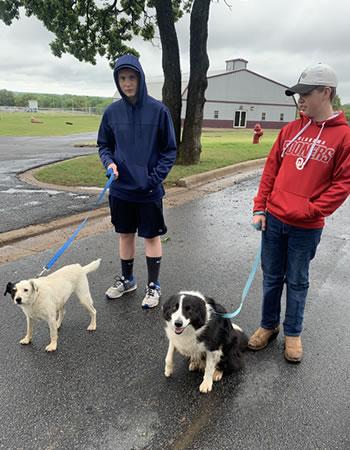 Two boys walking dogs